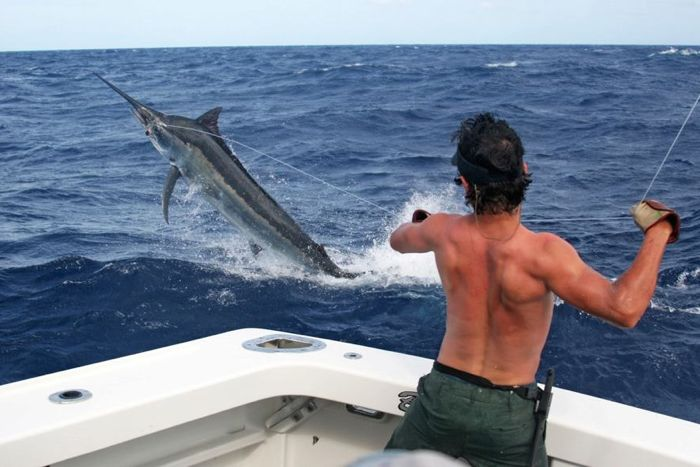 marlin fishing charter