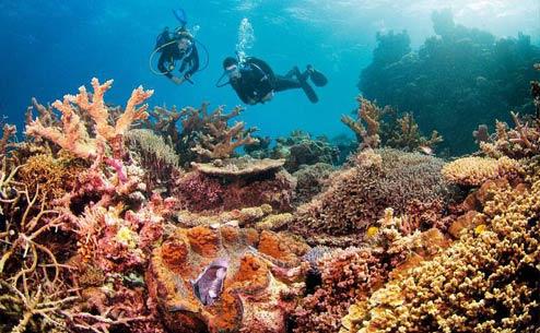 great barrier reef cairns diving