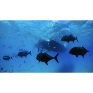 private scuba diving