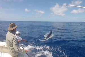 marlin fishing