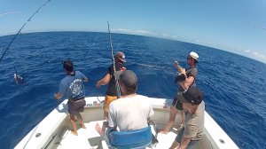 cairns marlin fishing