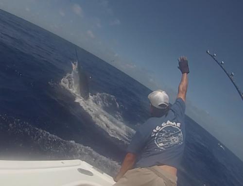 Cairns Marlin Fishing